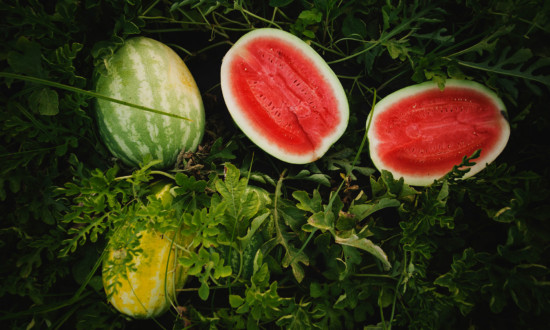 watermelons in field, two whole and one cut in half set in watermelon plants, greenery